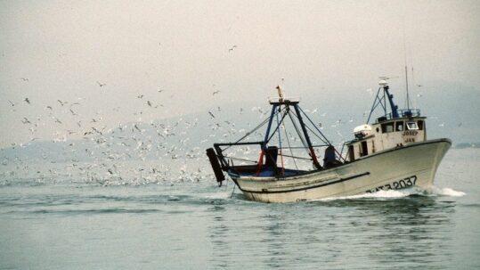 Ley pesca sostenible